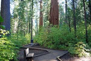 calaveras big trees state park