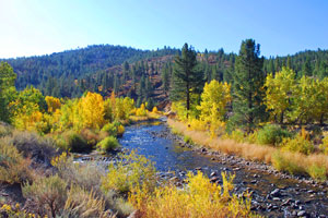 East Carson River fall colors