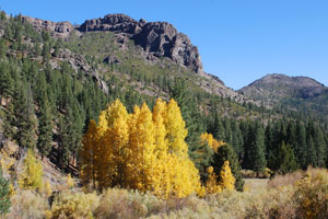 Ebbetts Pass fall colors at Scossa Cow Camp